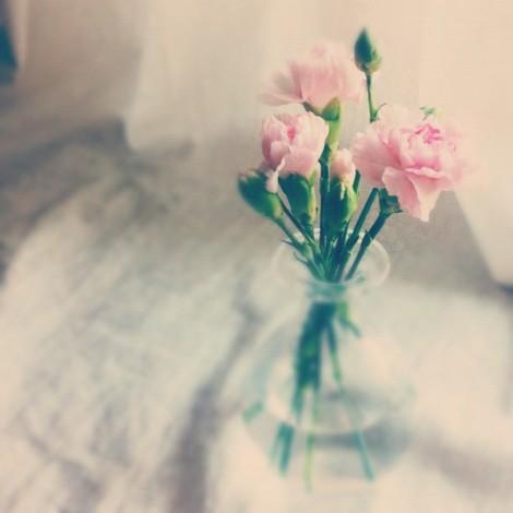 new blooms fresh flowers