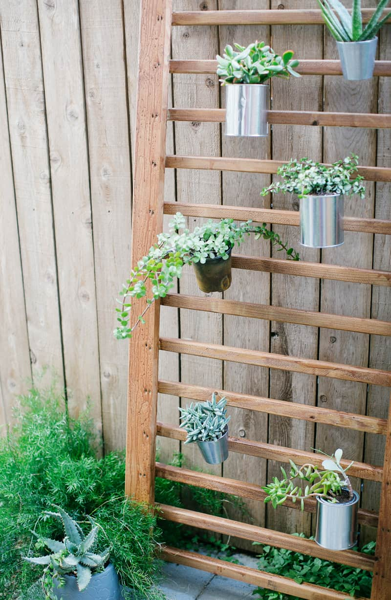 photo d'un jardin vertical de mur succulent fini