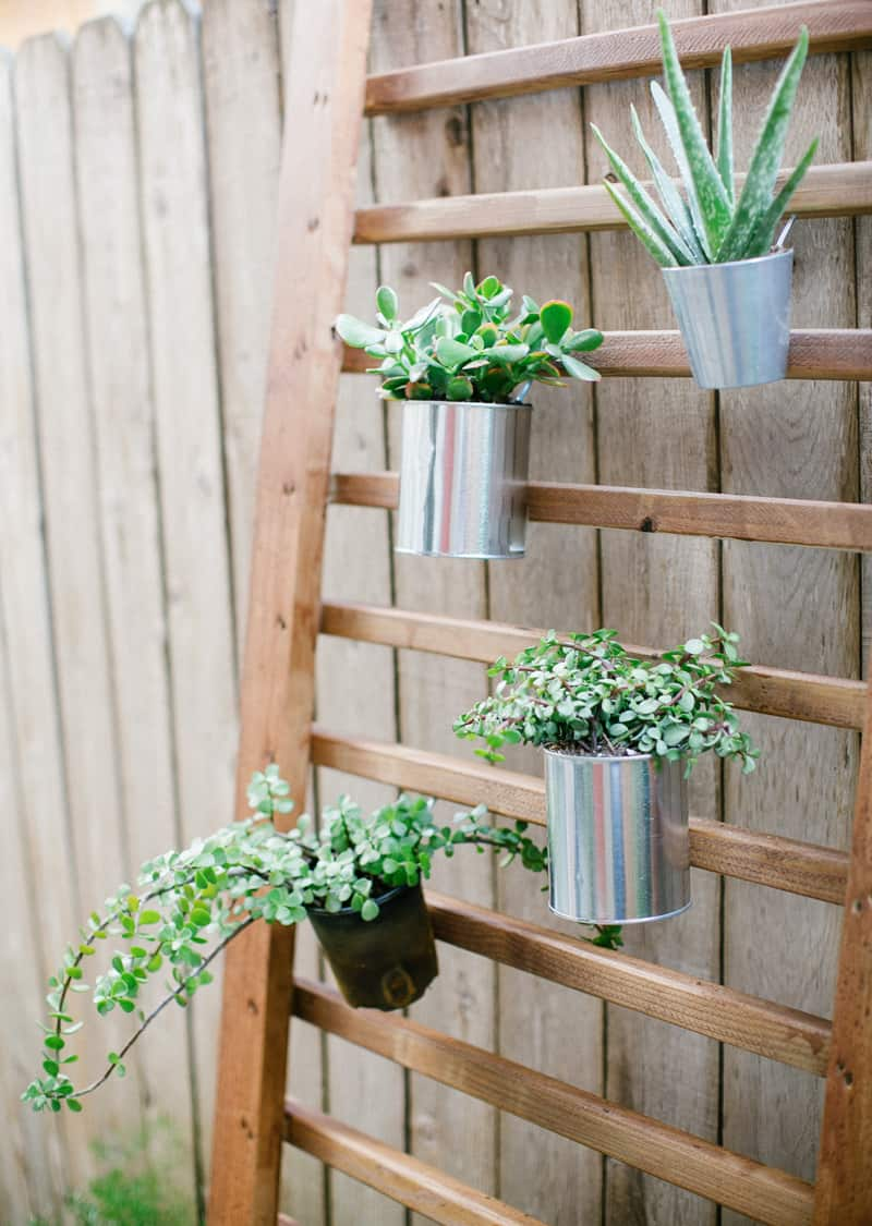 photo of a finished DIY vertical garden succulent wall