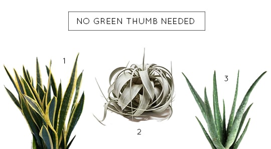 no green thumb needed with these plants for your home | sugar & cloth
