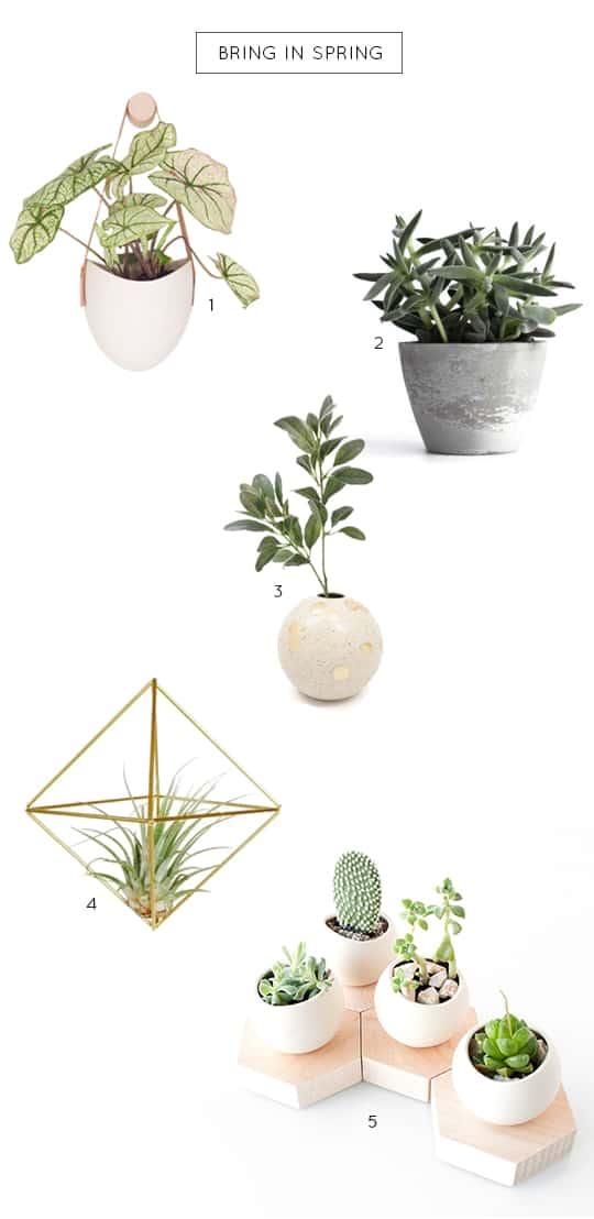 a plant for every room in the house | sugar & cloth