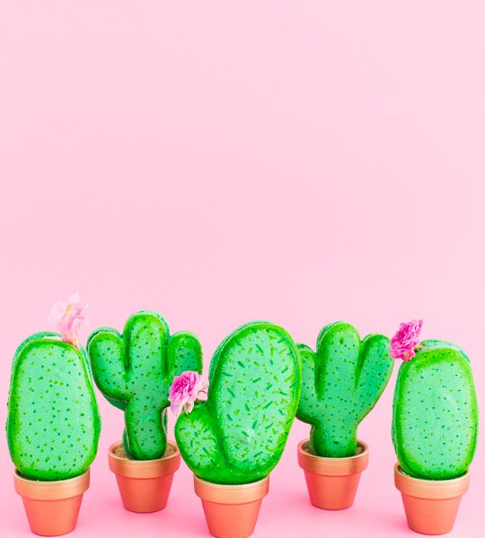 DIY potted cactus macarons | by top Houston lifestyle blogger Ashley Rose of Sugar & Cloth
