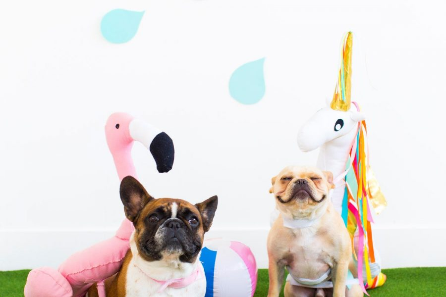 Summer never ends when you have DIY pool float dog costumes, am I right?! - sugar and cloth - halloween ideas - unicorn pool float - flamingo pool float