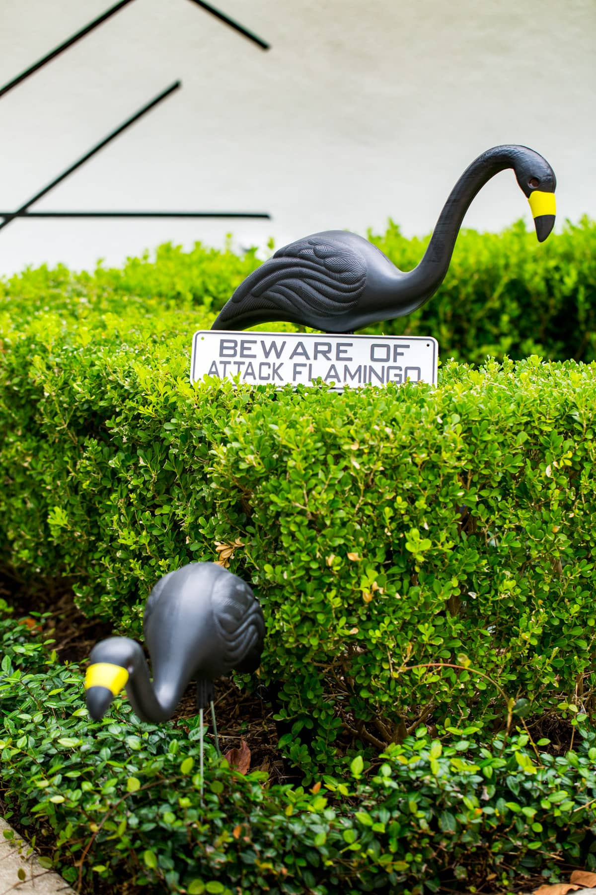 beware of the attack flamingos! - Palm Springs Inspired Halloween Entryway Decor & Product Round Up by top Houston lifestyle blogger Ashley Rose - #halloweendecor #halloween #decor #home #holidays #curbappeal #palmsprings #midcentury