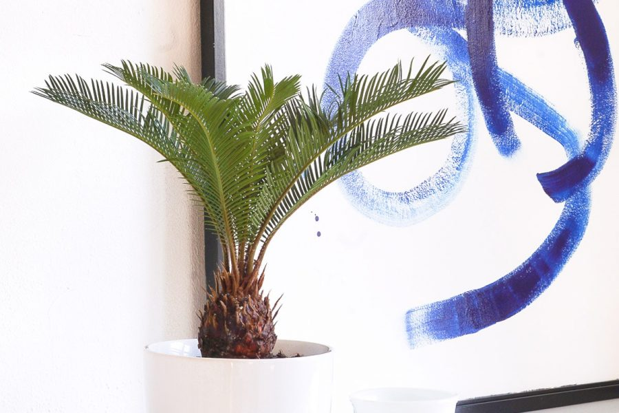 photo of an easy DIY Mid Modern Planter by top Houston lifestyle blogger Ashley Rose of Sugar & Cloth