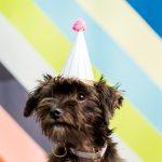 Giving Back: A FREE DIY Workshop at our Studio & BARC Houston Animal Adoption Event!