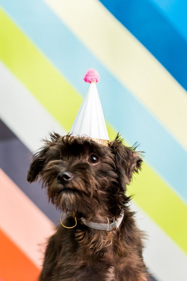 Giving Back: A FREE DIY Workshop at our Studio & BARC Houston Animal Adoption Event! - animal photography - by top Houston lifestyle blogger Ashley Rose of Sugar and Cloth