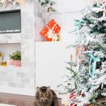 Gifts for Pets (and Pet Parents!)
