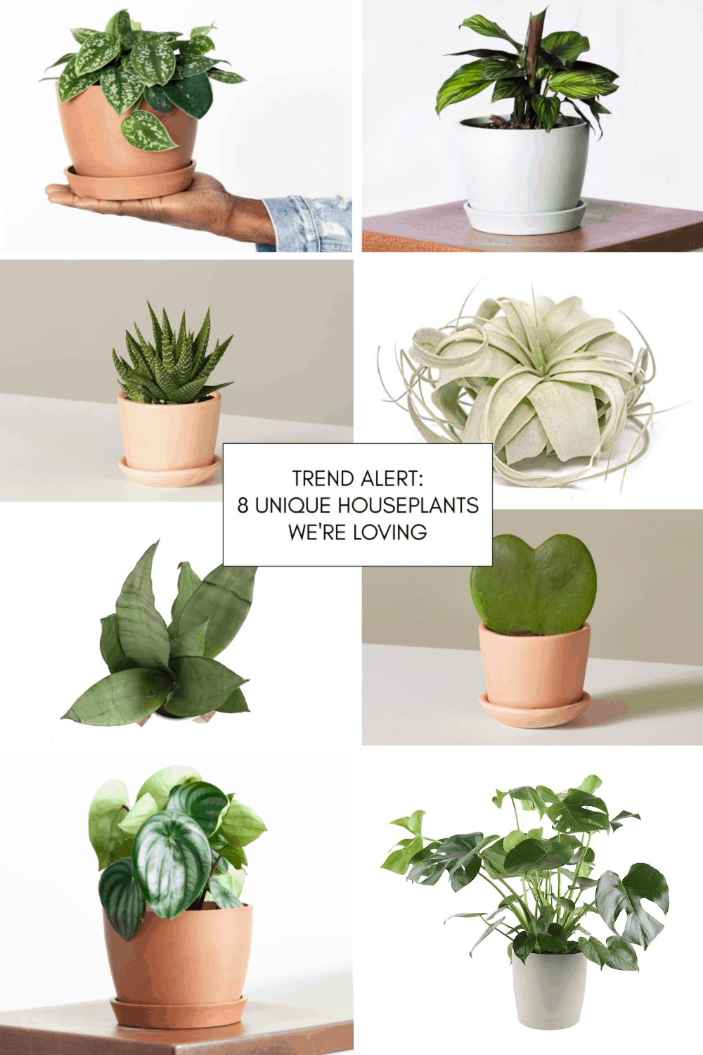 Trend Alert: 8 Unique Houseplants We're Loving by top Houston lifestyle blogger Ashley Rose of Sugar & Cloth