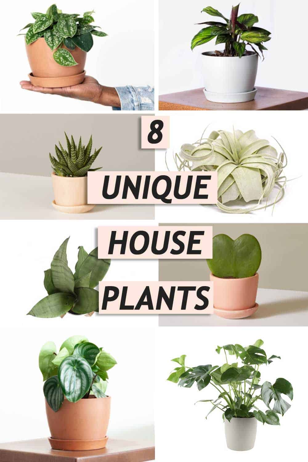 8 unique house plants were loving graphic by sugar and cloth