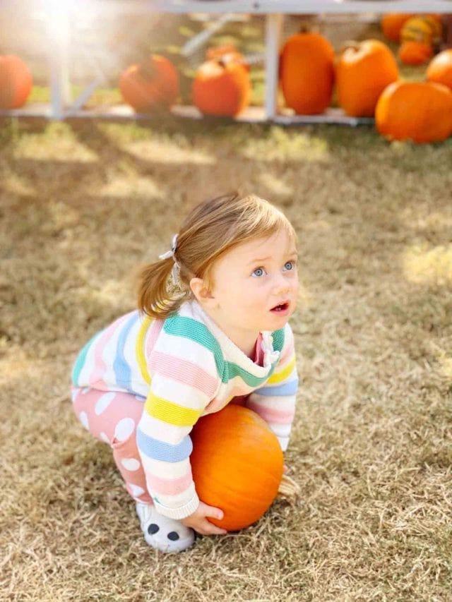 little girl with a pumpkin at pumpkin patch