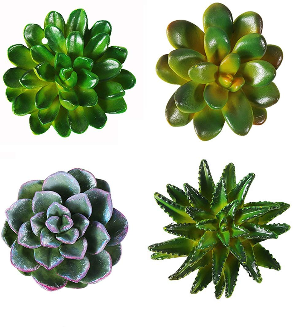 photo of four mini succulent plants